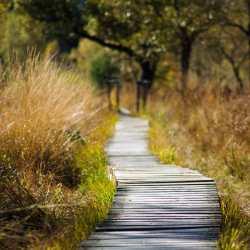 KenZen Shiatsu Lyon - Balade en pleine nature
